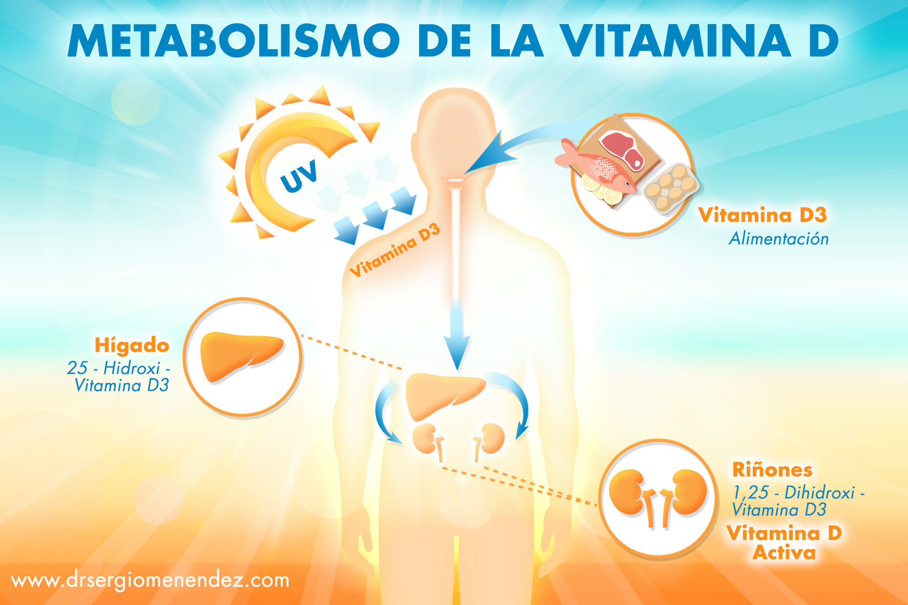 Esquema beneficios vitamina D